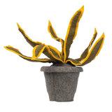 Sanseveria Plant Geel